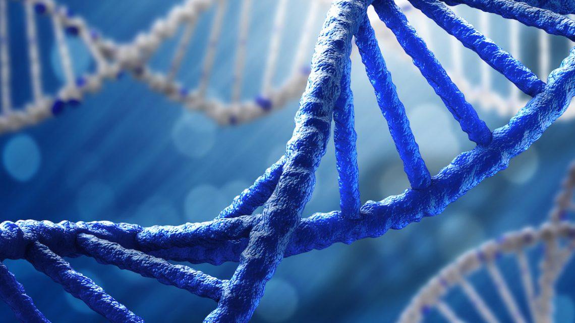 DNA:Το Δεσοξυριβονουκλεϊκό Οξύ | Biology.gr