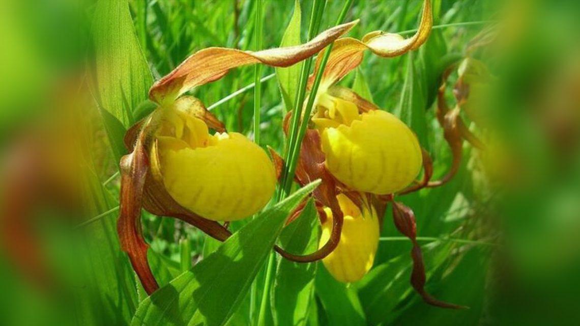 Τα φυτά μυρίζουν τον Κίνδυνο | Biology.gr