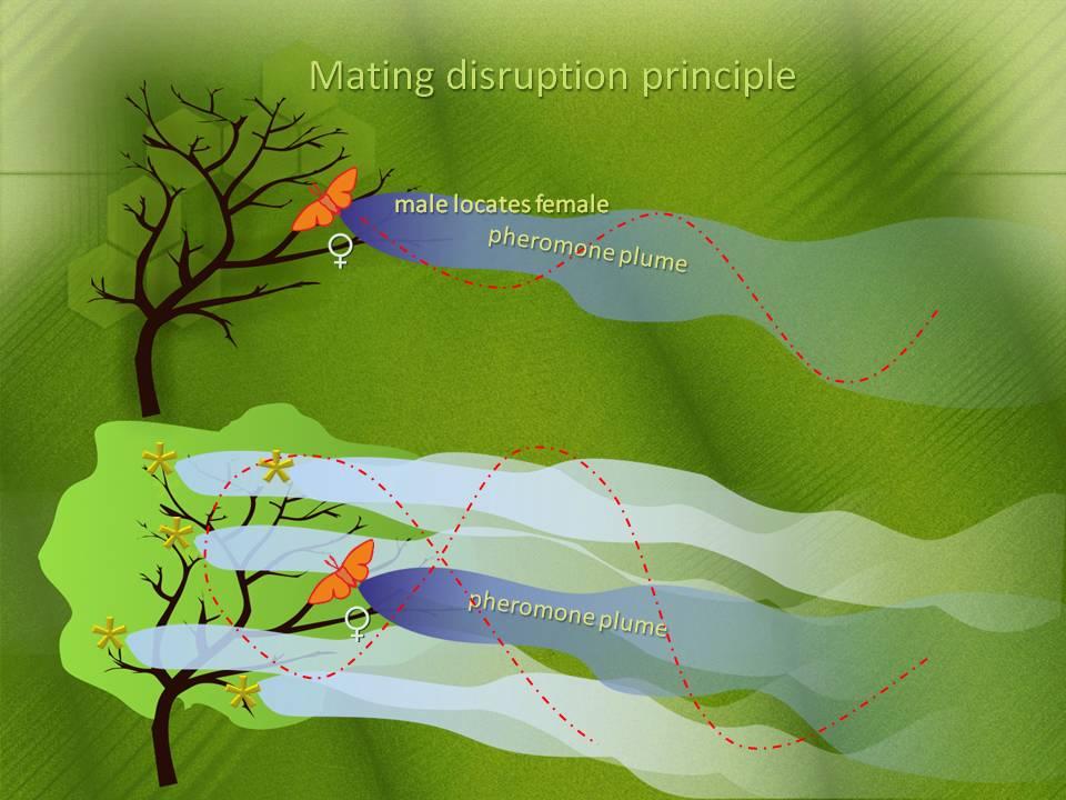 Από τις συνθετικές φερομόνες σε Φερομόνες από ζύμες και φυτά | Biology.gr