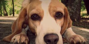 dog-smiling1