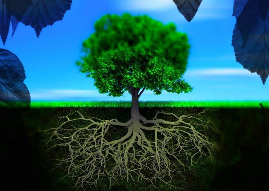 Πώς προσανατολίζονται οι ρίζες ενός φυτού; | Biology.gr