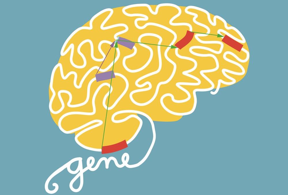 Η τροποποίηση του RNA ελέγχει την ανάπτυξη του εγκεφάλου | Biology.gr