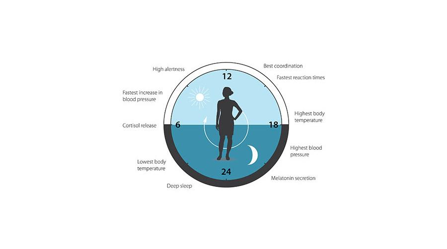 Θεραπεία με διαγονιδιακό δέρμα | Biology.gr
