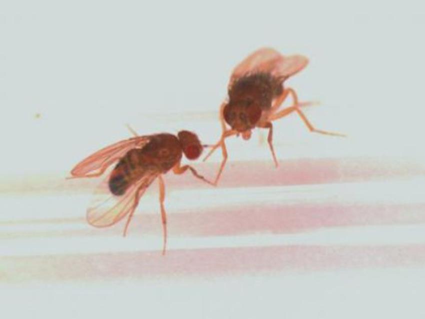 Το φύλο του ερευνητή επηρεάζει... τα πειραματικά αποτελέσματα! | Biology.gr